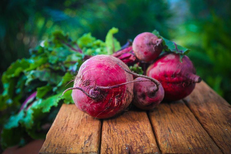 cultivar-remolacha