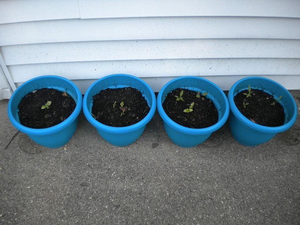 errores-plantar-semillas