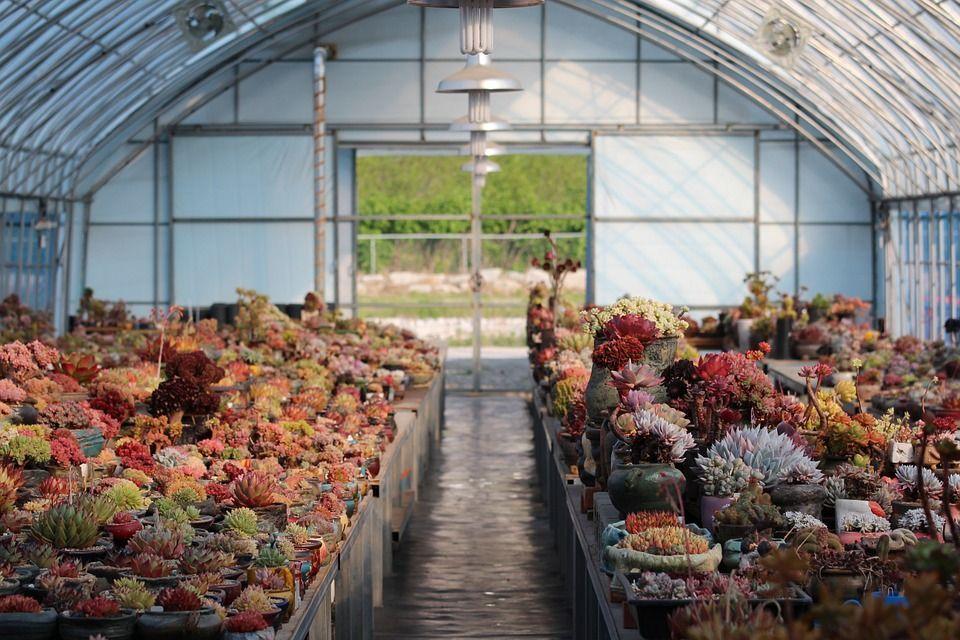 plantas-para-invernadero1