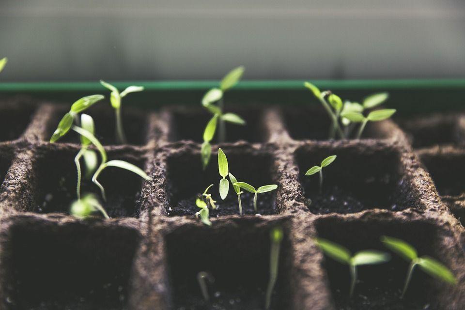 iniciar-cultivo