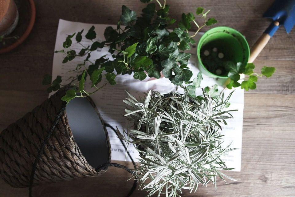 sustratos-plantas-macetas