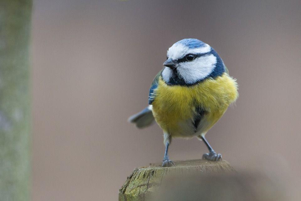 Aves beneficios