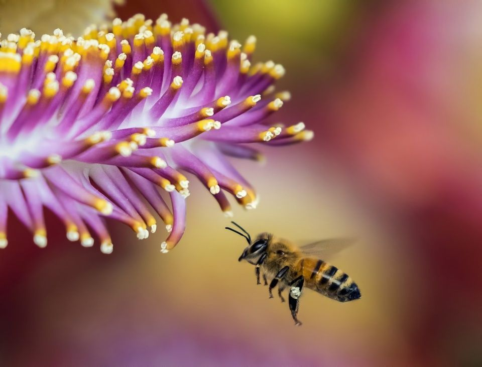 Plantas abejas