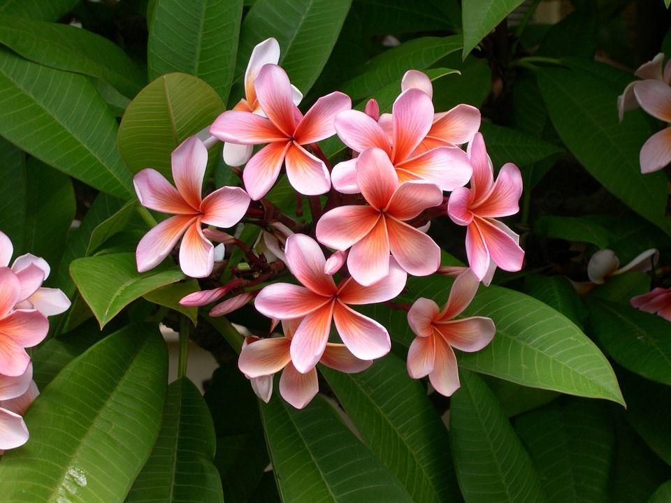Plantas anuales bianuales