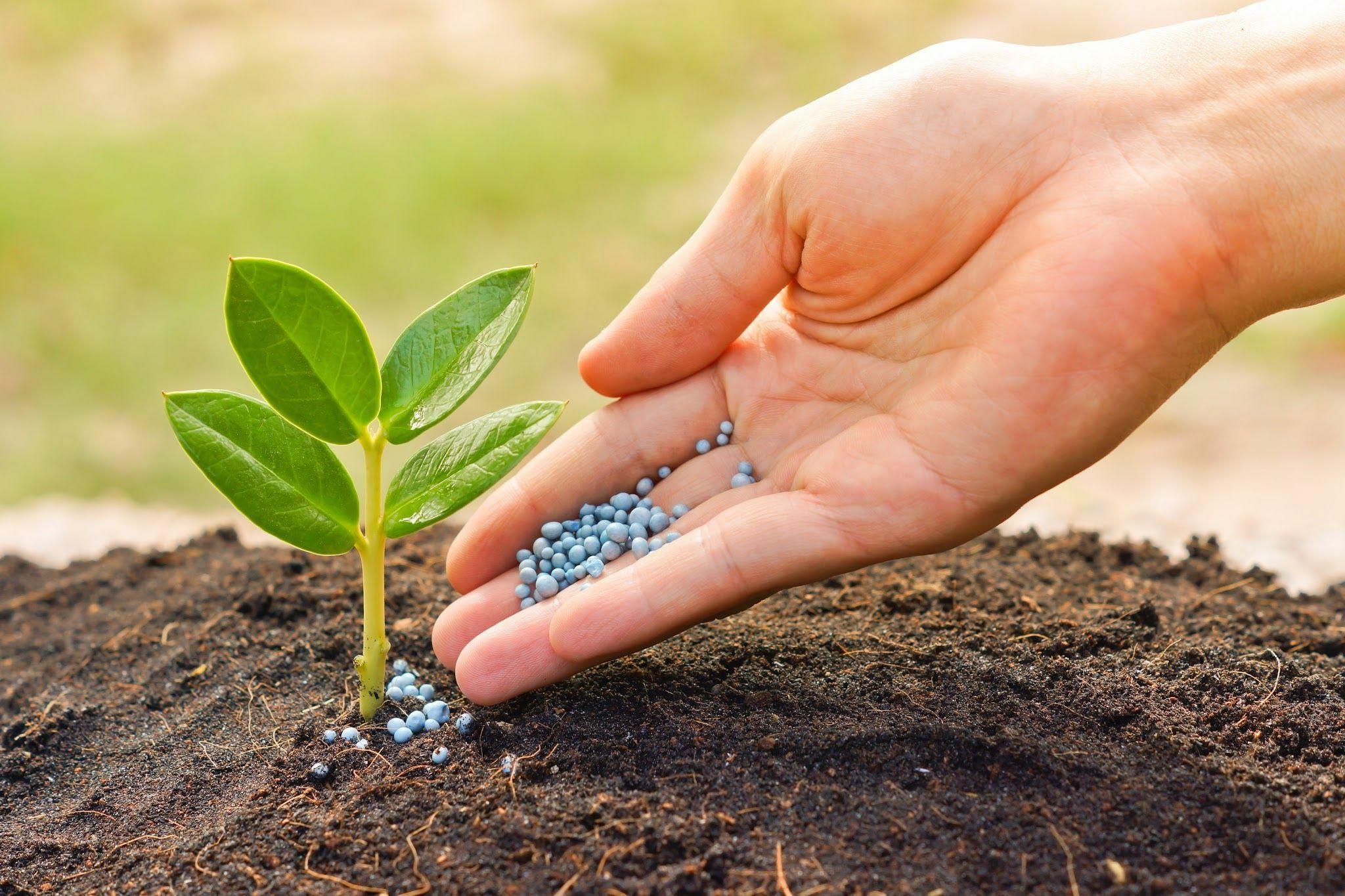 Consejos para encontrar el fertilizante apropiado