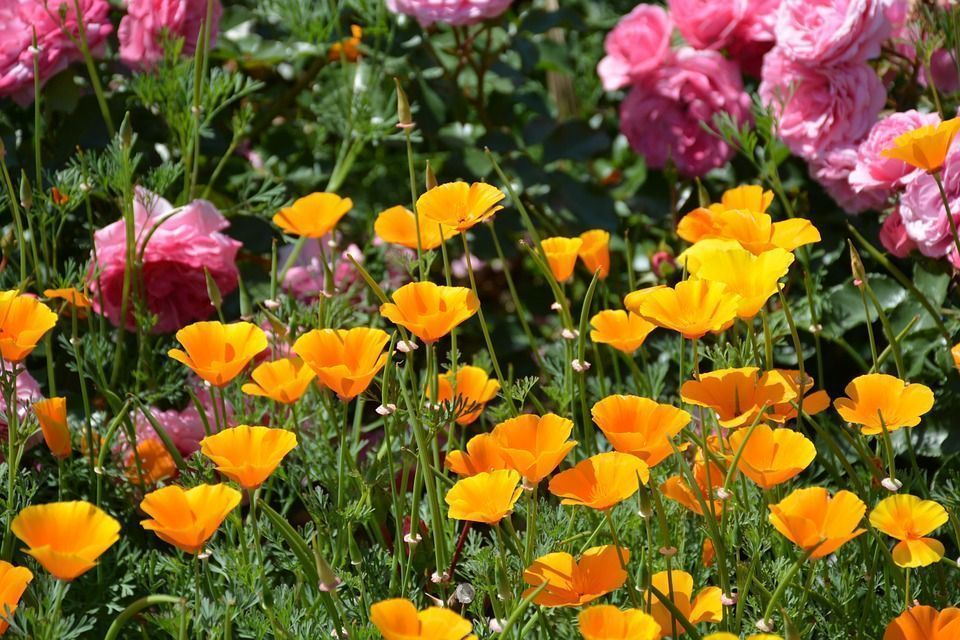 Flores autosembrarse