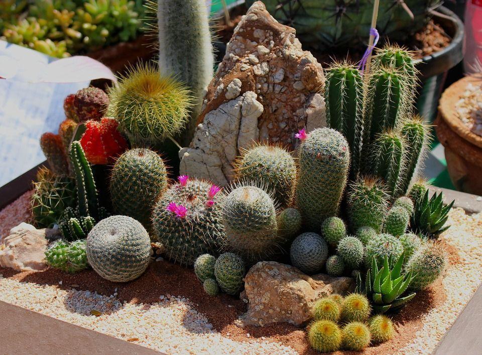 Tipos de jardines y sus caracter sticas for Tipos de arboles y sus caracteristicas