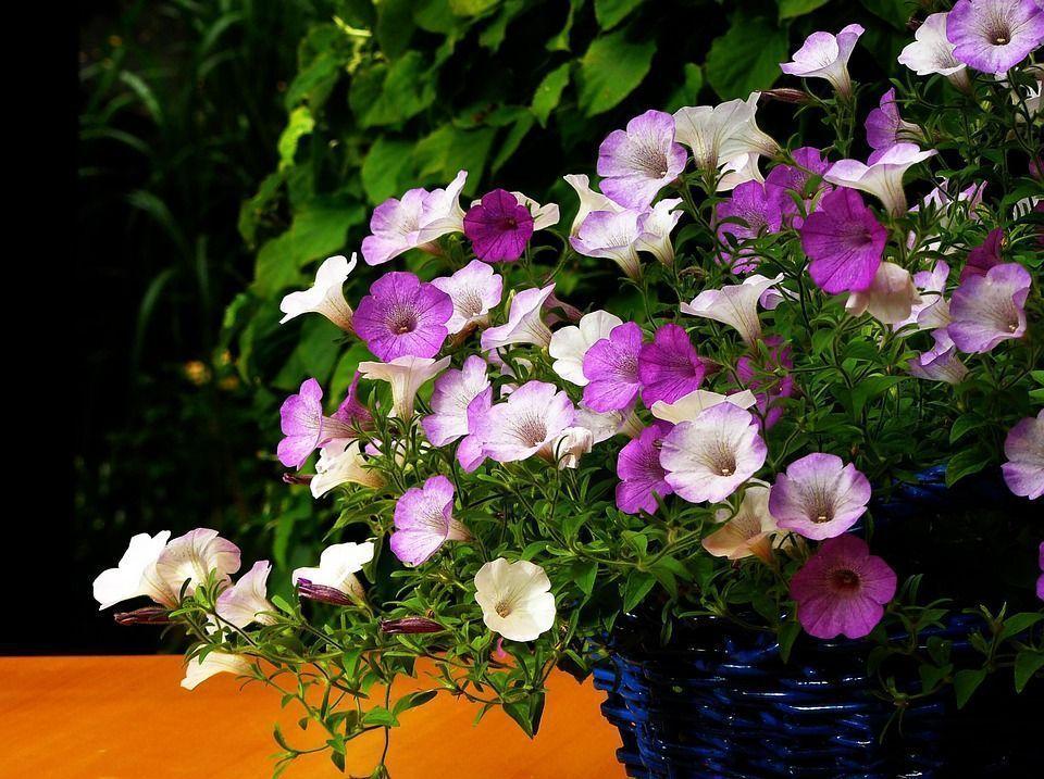 Plantas colgantes cuidados