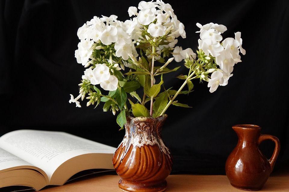 Plantas perennes verano