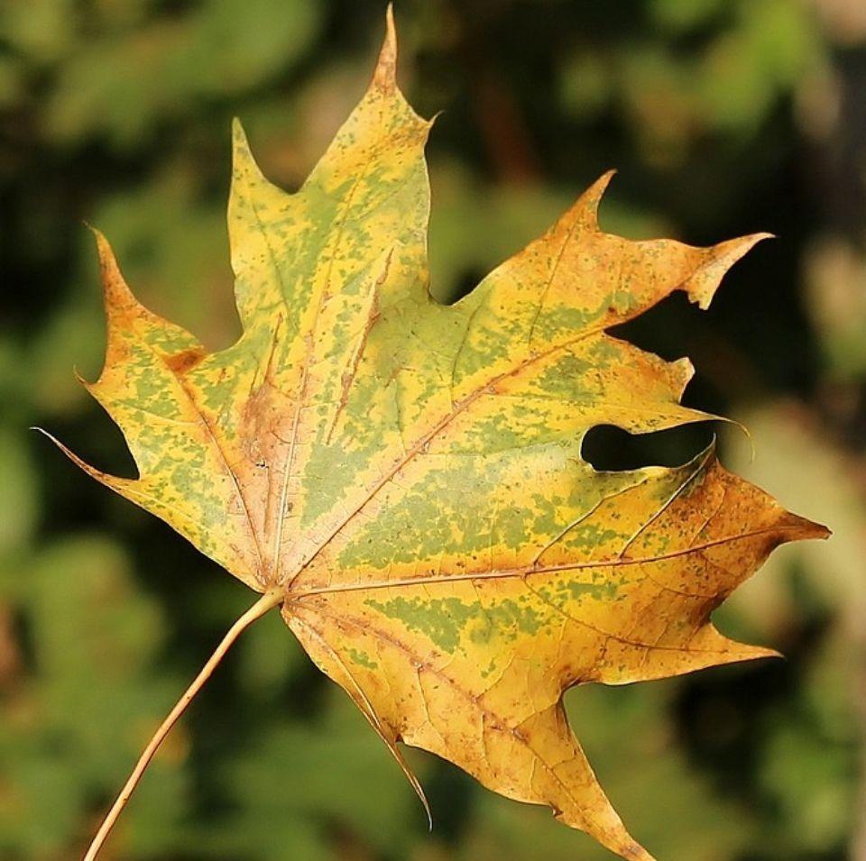 Bordes hojas