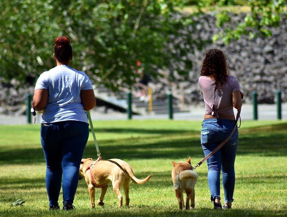Caminar mascota pasto