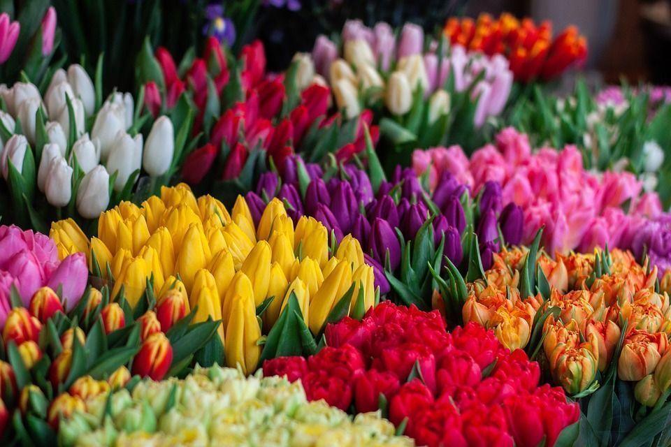Importancia del color en las flores