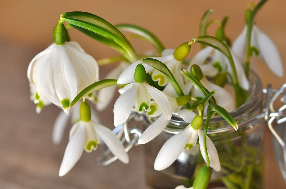 Flores aroma