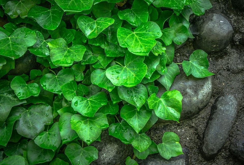 Plantas Ideales Para Muros Verdes Descubrelas - Plantas-verdes-exterior