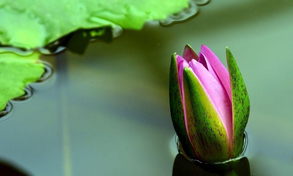Plantas estanque