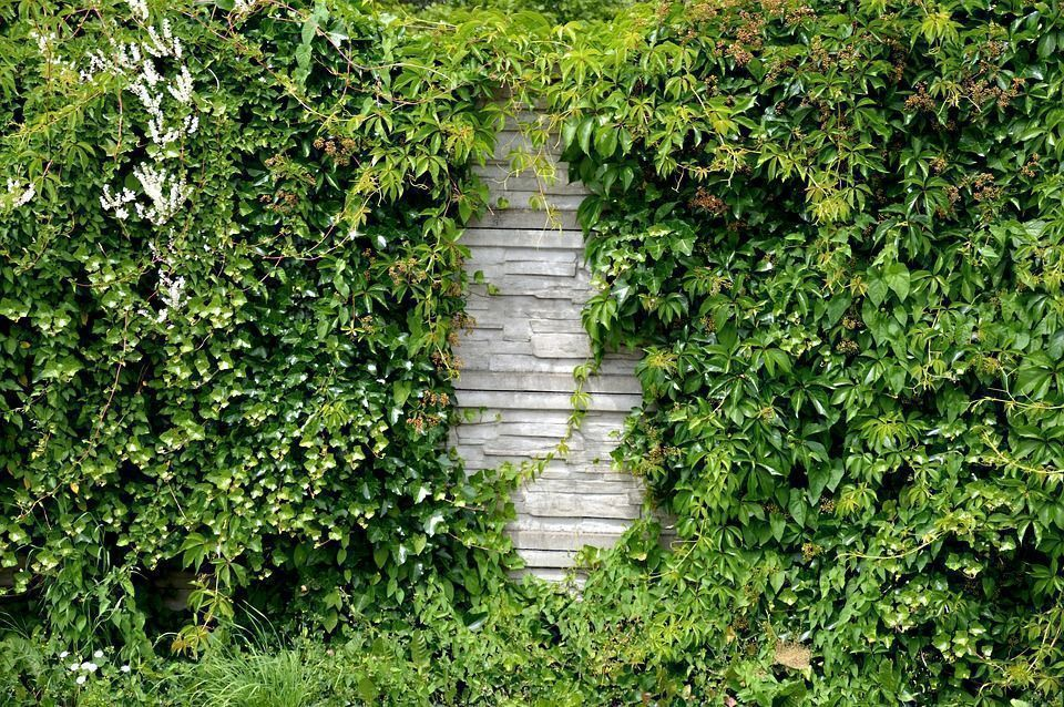 Plantas muros verdes
