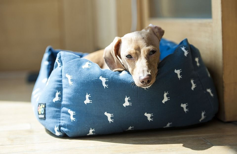 Consejos cama perro