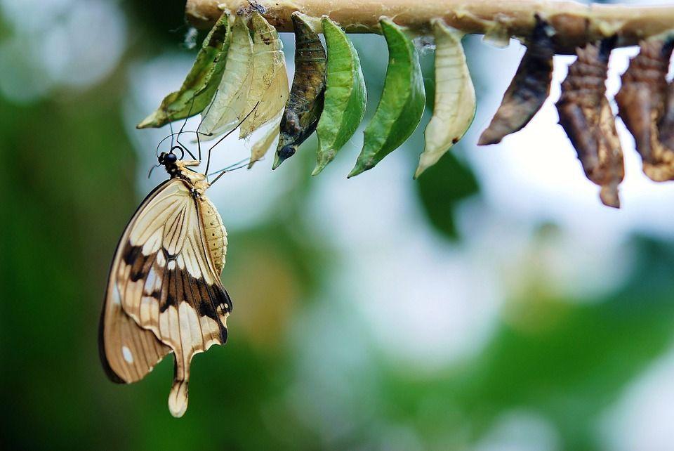 Criar mariposas
