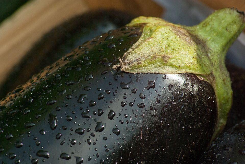 cultivar berenjenas 1