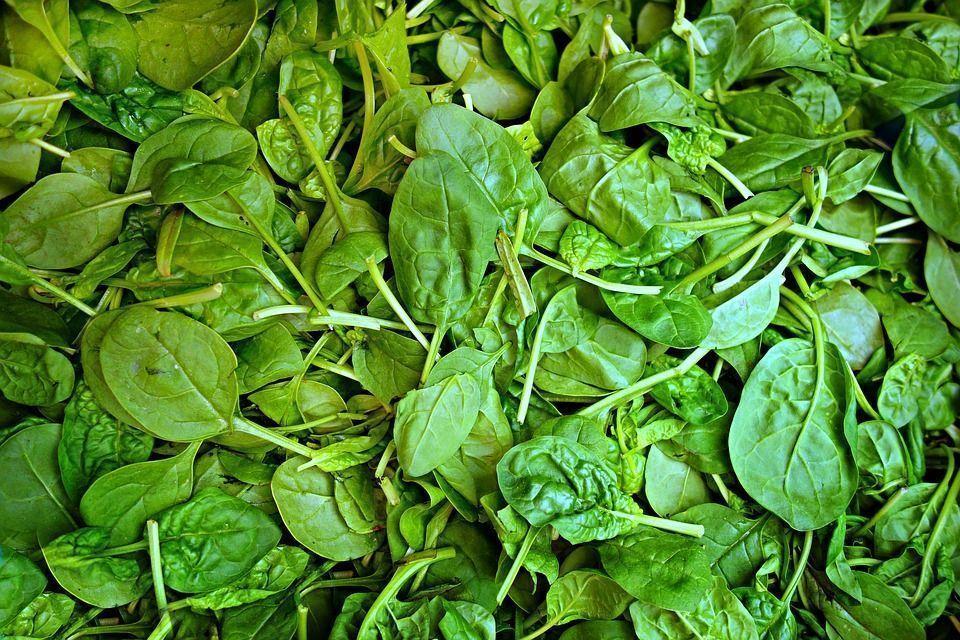 variedad de espinacas