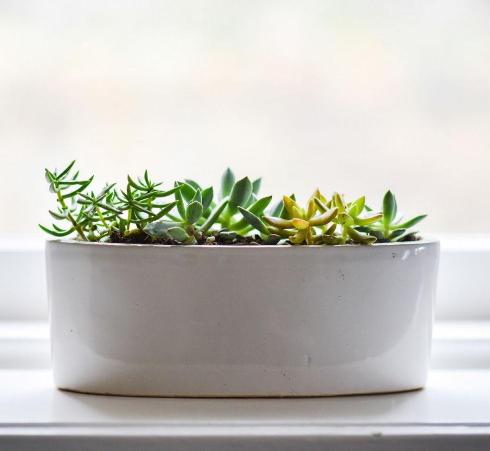 Plantas resistencia