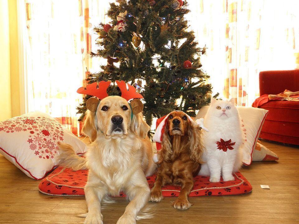 Adornos navideños vs mascotas ¡Evita peligros!