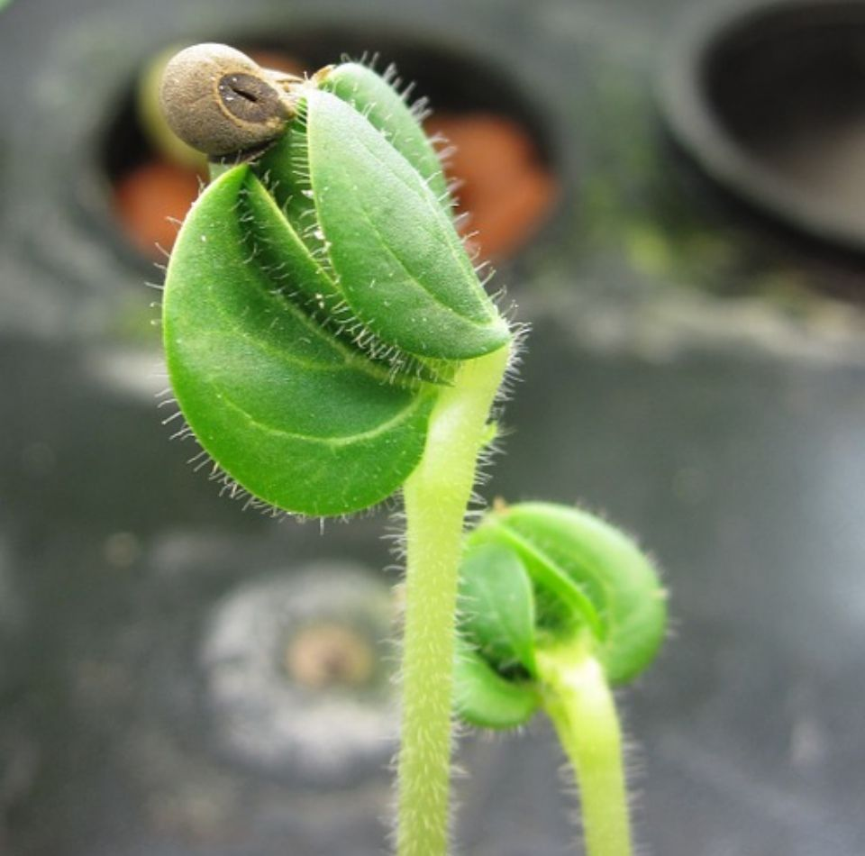 Problemas semillero
