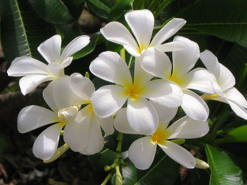 Aromas flores