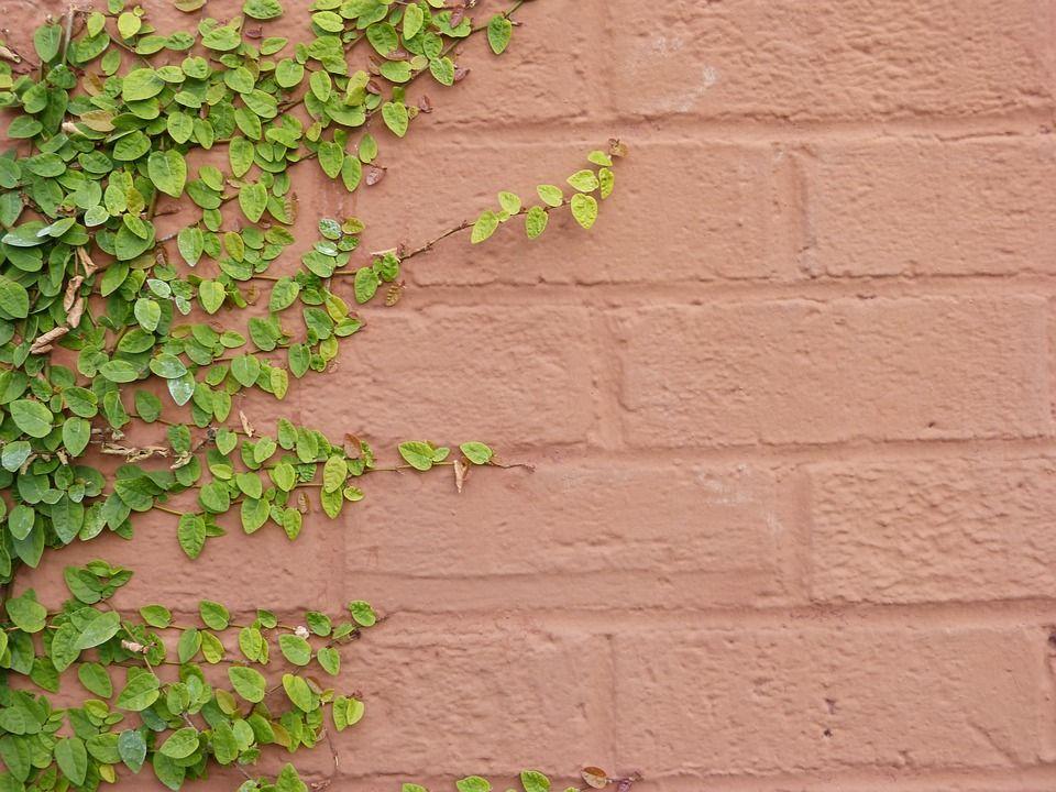 Ejemplares paredes
