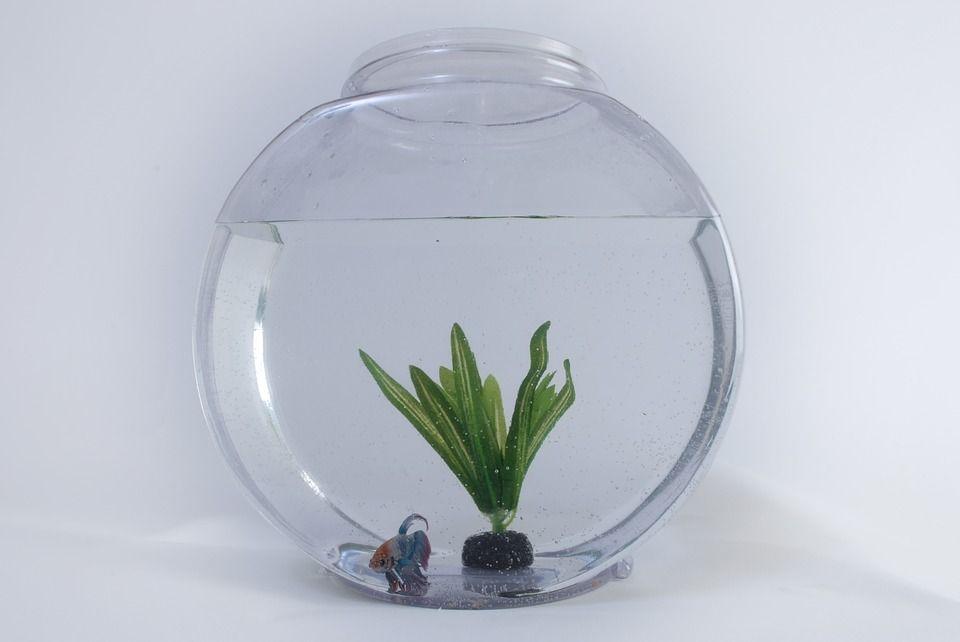 Aclimatar peces acuarios