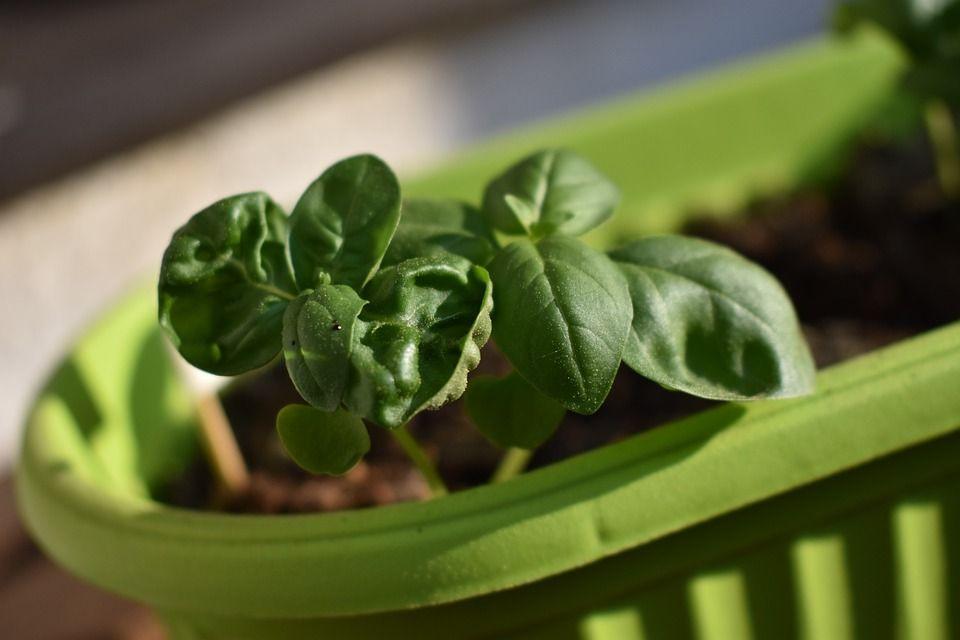 Plantas de verano que desprenden un aroma único