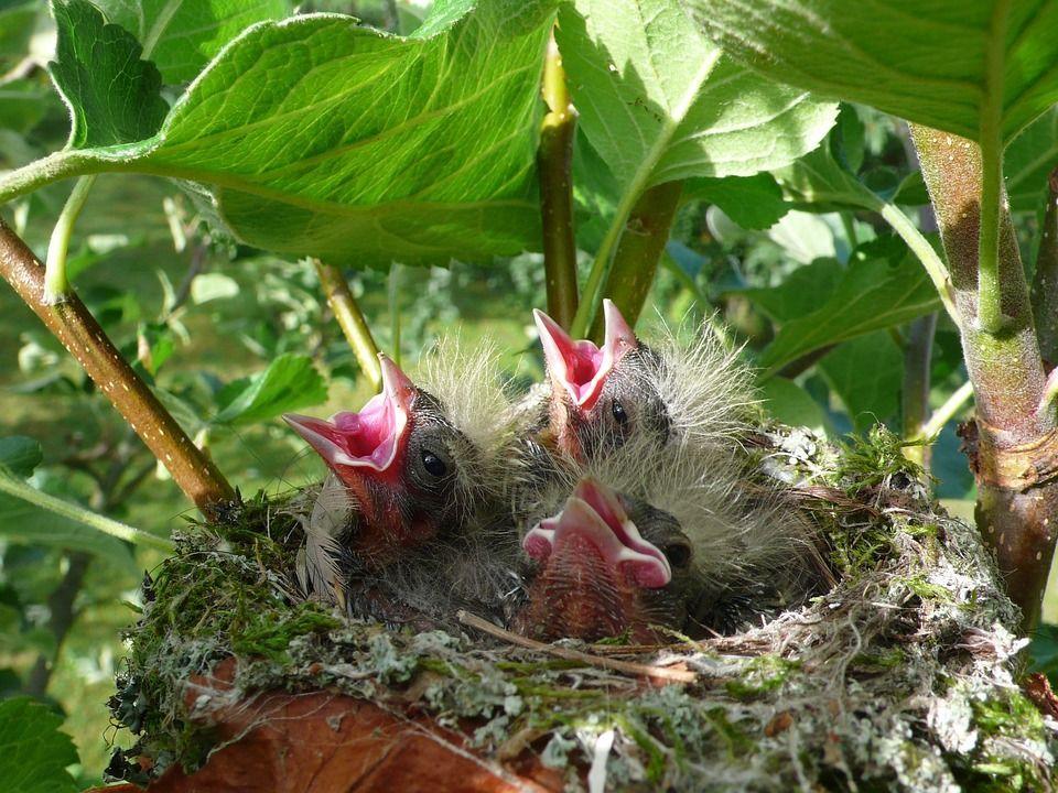 Construir nidos