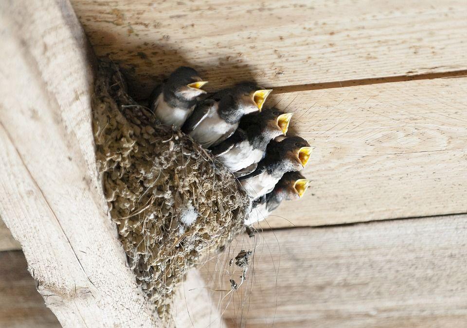 Nidos aves