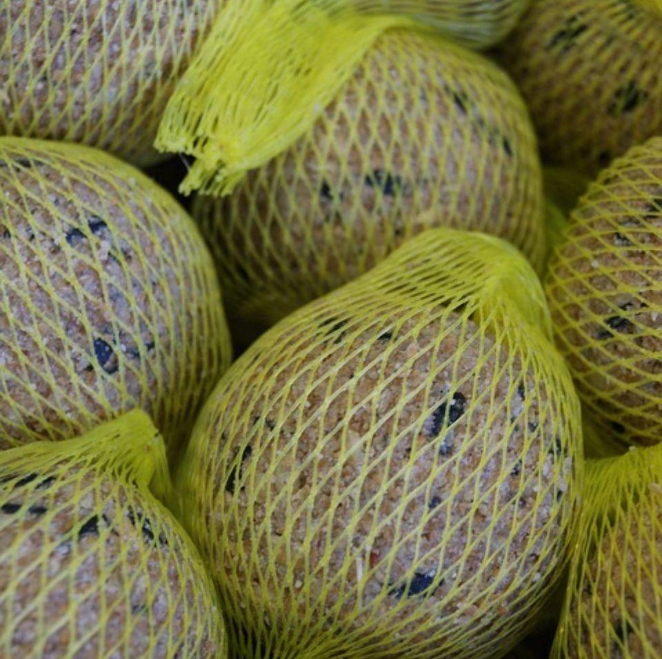 Phalaris canariensis