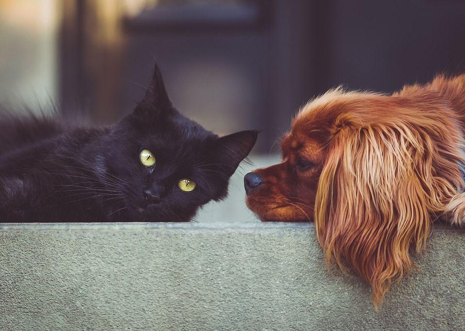 Mascotas casa