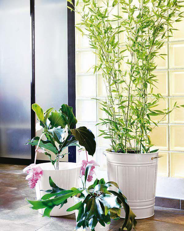 15 plantas de interior resistentes y de f cil mantenimiento - Plantas resistentes de interior ...