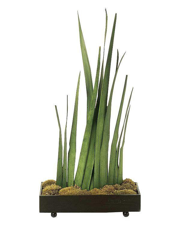 15 plantas de interior resistentes y de f cil mantenimiento for Plantas de interior resistentes