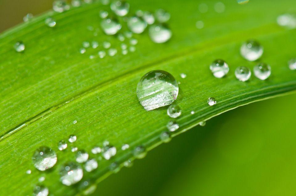 Ahorrar agua plantas