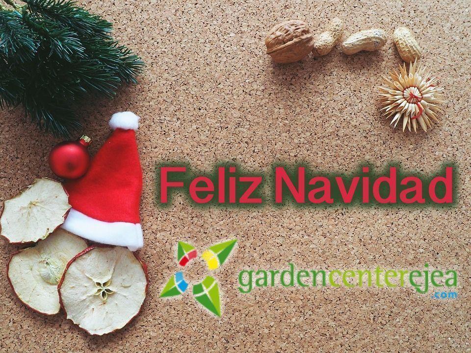 Inicio Feliz Navidad.Garden Center Ejea Les Desea Una Feliz Navidad A Todos