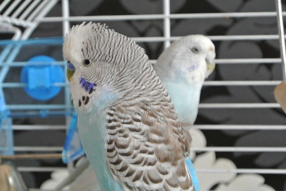 Aves juguetes
