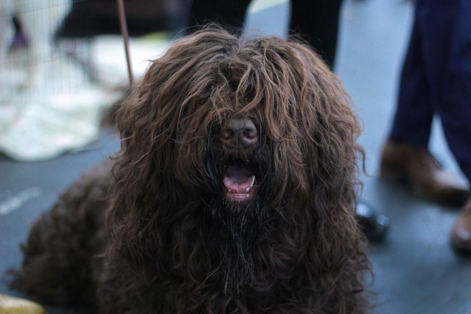 Pelo perro
