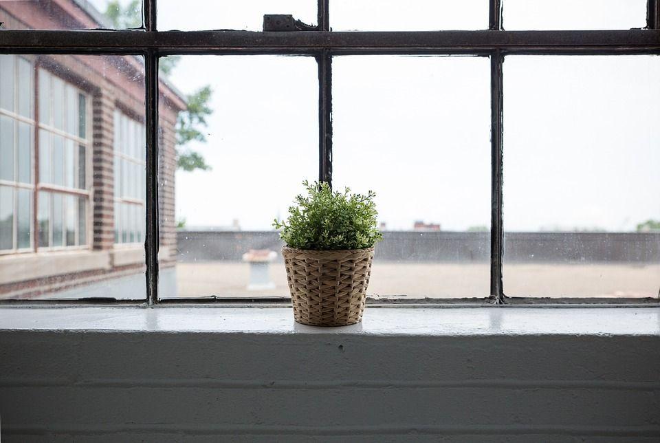 Plantas absorben la humedad