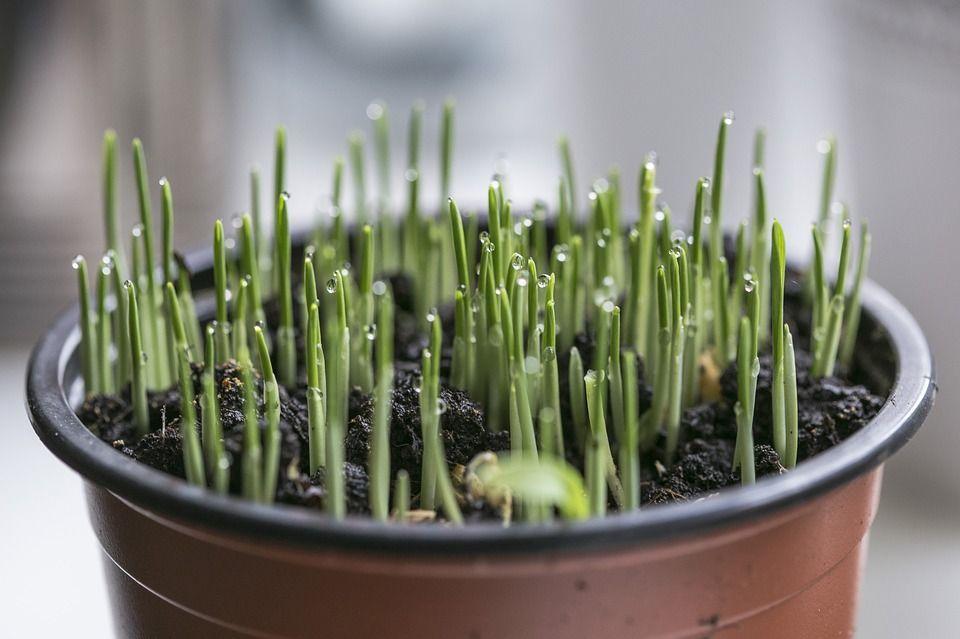 Plantas humedad