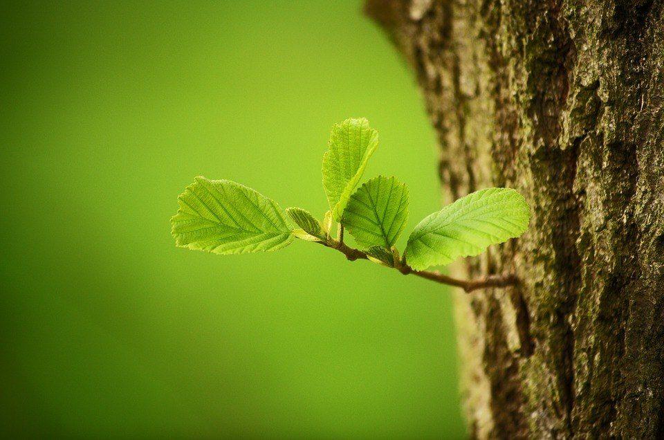 Engrosar tronco