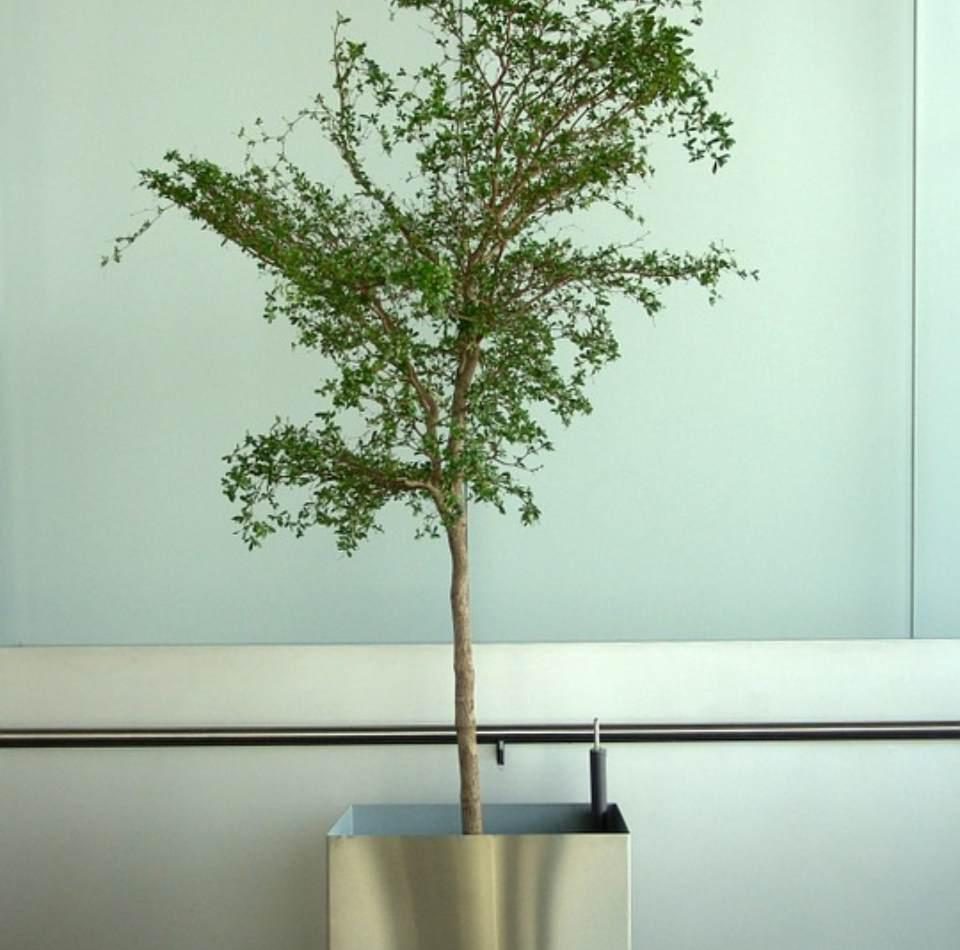 Ensanchar tronco