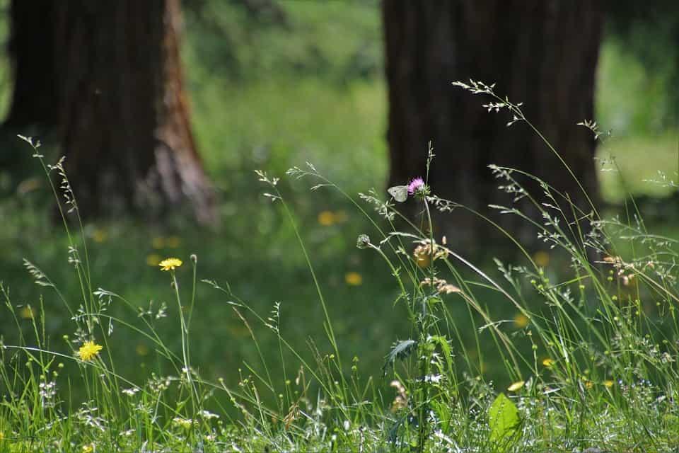 Plantas vientos