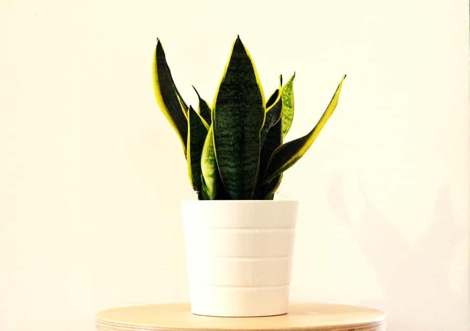 Plantas absorben calor