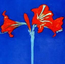 Amaryllis-Piet-Mondrian