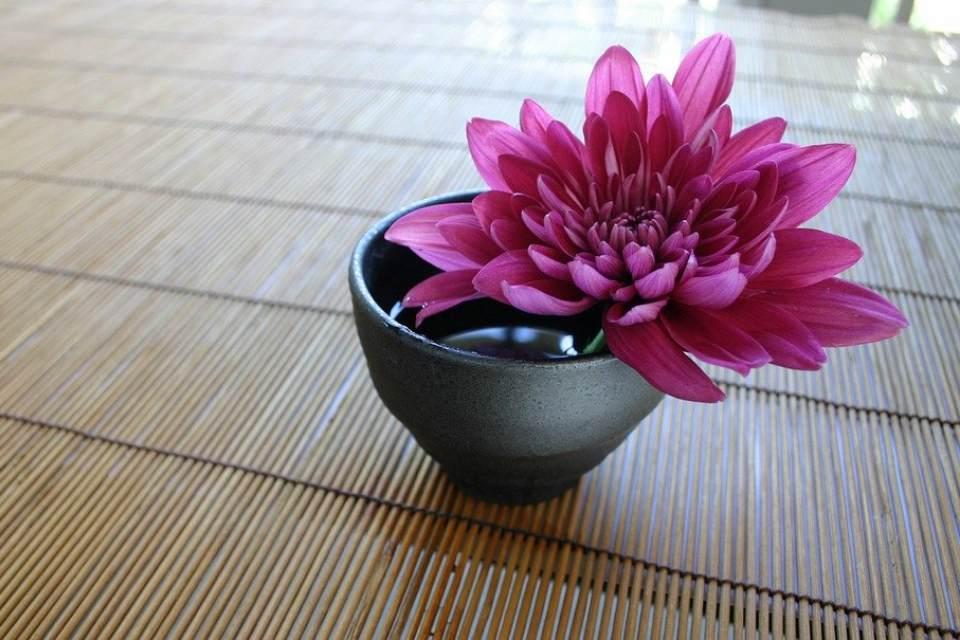 Crisantemo-flor-medicinal
