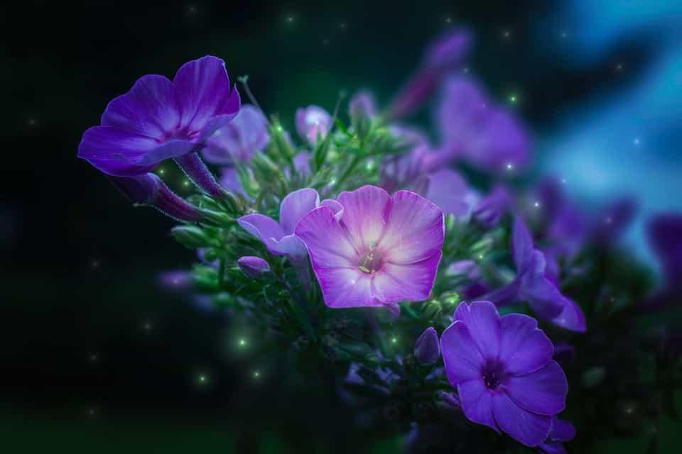Leyenda violeta